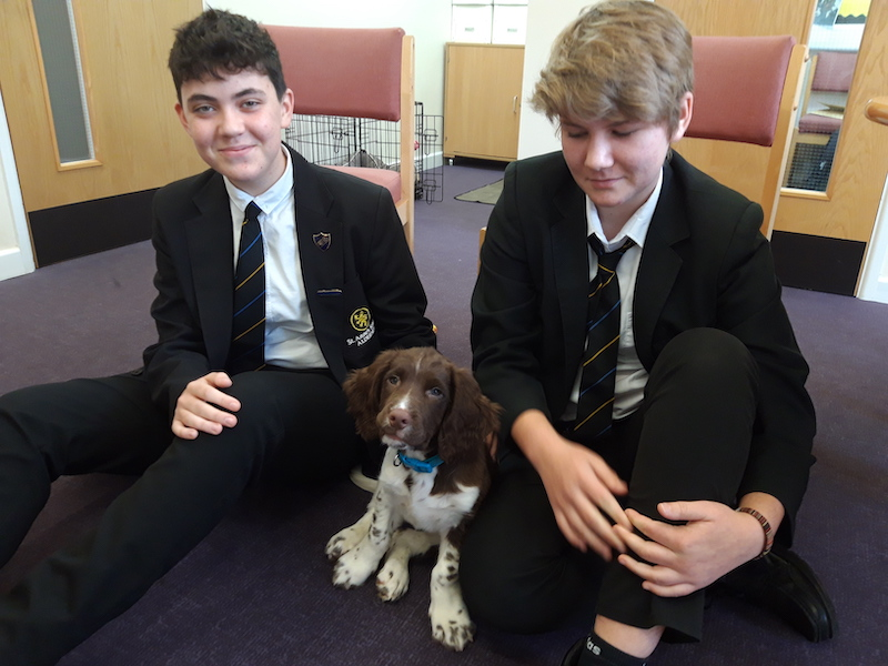 st annes school alderney therapy dog