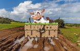 Muddy Cow 5k Fun Run - 2020