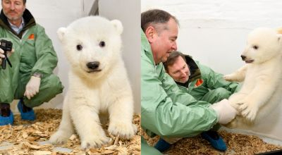 'Cheery' baby polar bear receives first examination at Berlin zoo