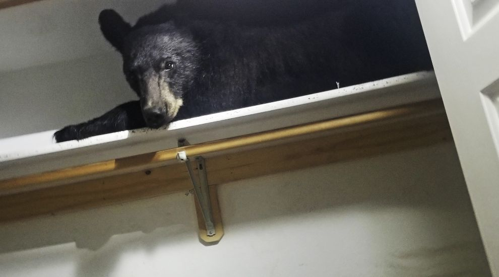 Bear locks itself into US home and sleeps in wardrobe