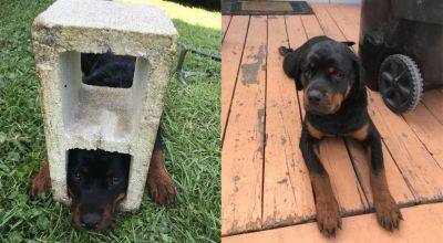 Florida fire department rescues dog with head stuck in cinder block