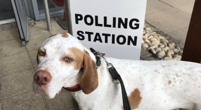 In Pictures: Dogs at polling stations