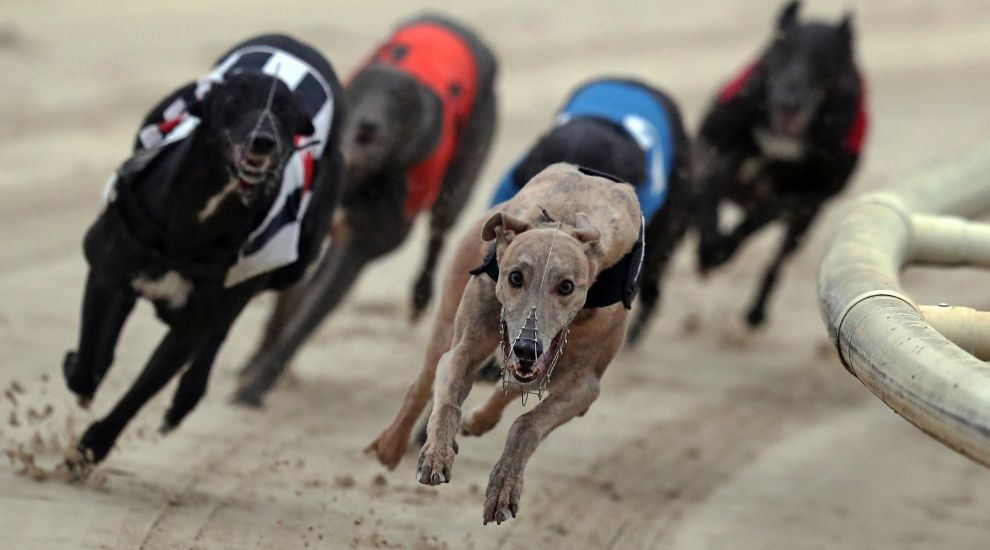 Co Antrim greyhound stadium closed with 'immediate effect'