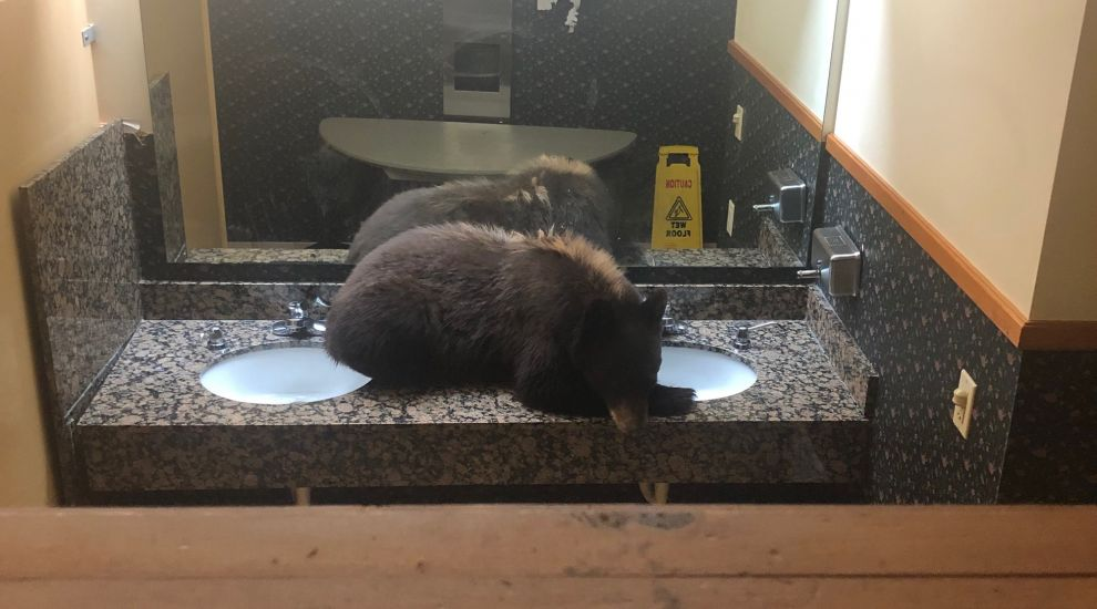Hotel staff startled to find bear curled up in toilet
