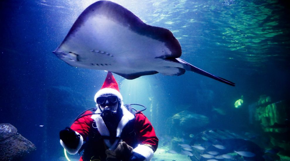 Swimming Santa feeds the fish at Berlin aquarium