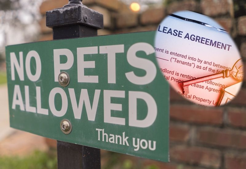 Landlords urged to accommodate pets