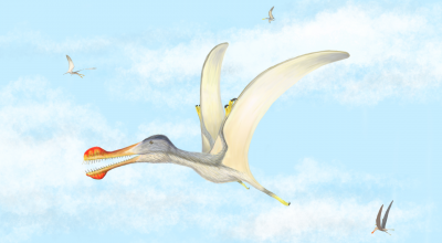 Three new species of pterosaur discovered in the Sahara