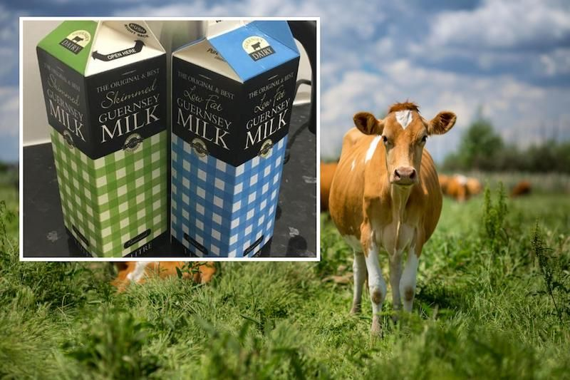 Would you use a milk dispenser in Guernsey?