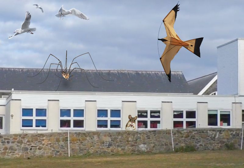 States close in on Vale School gulls   Bailiwick Express