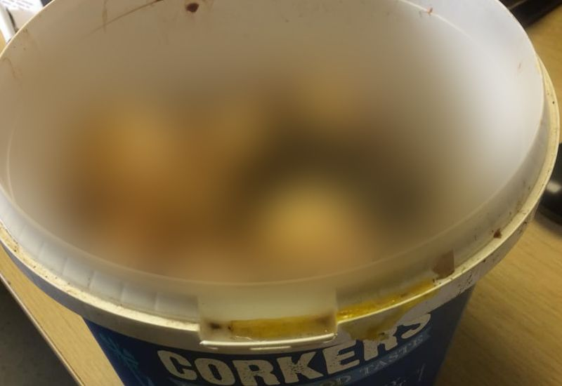 Dead chicks found in bucket