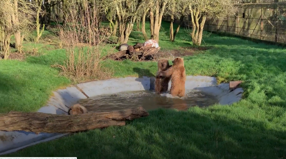 Bears spotted playing in pool at zoo after coming out of winter hibernation