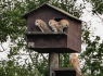 Can you help? Barn Owl project launched